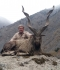 Markhor hunted by Fred Rich - G.H. Farooqui